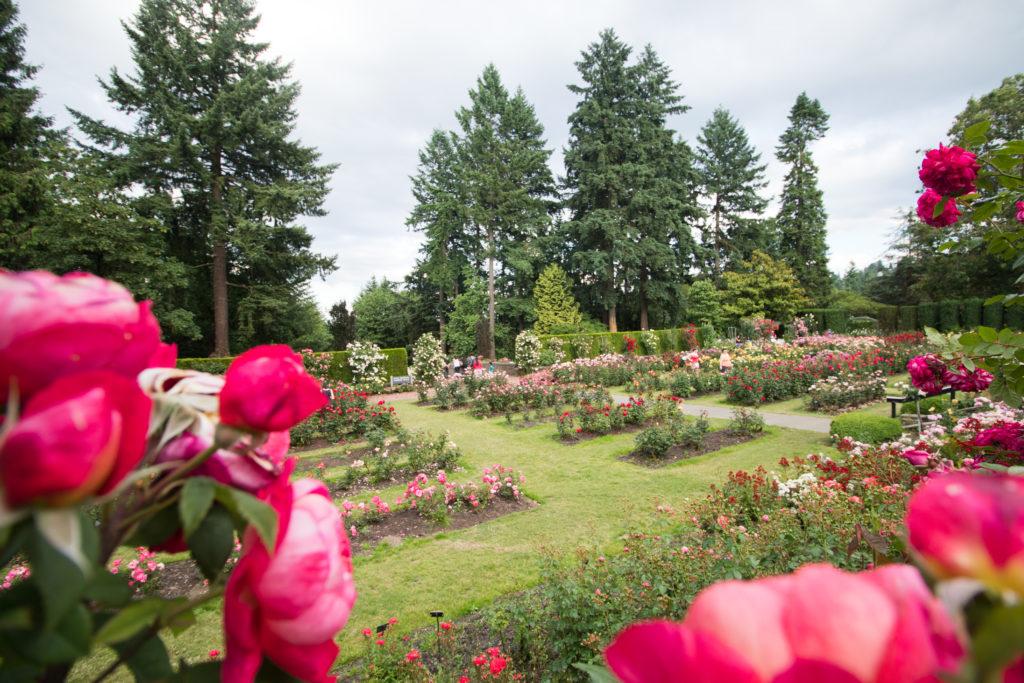 Portland\'s International Rose Test Garden  
