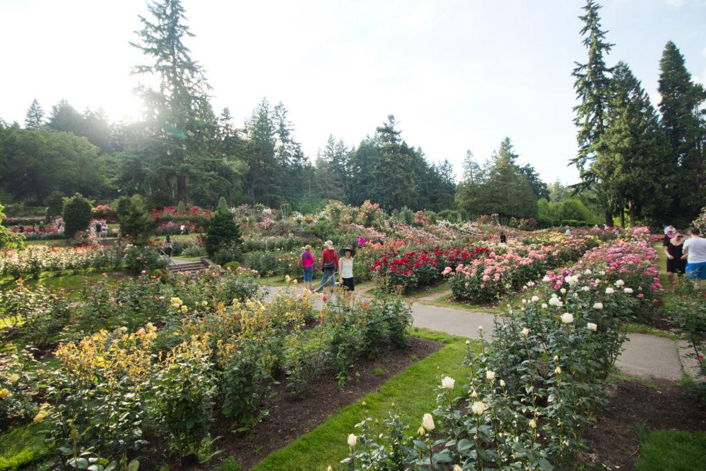 Portland S International Rose Test Garden